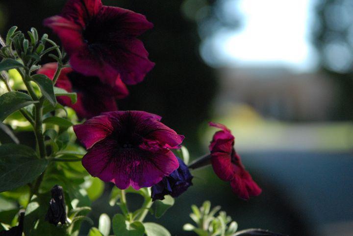 Dark Flowers -  Aidenma23