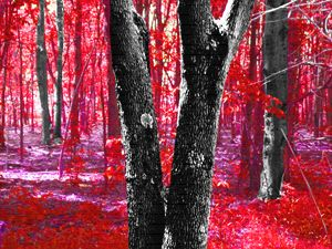 A Lovely Forest in Reds