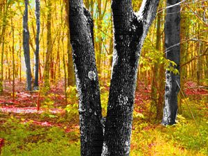 Lovely Forest in Yellows