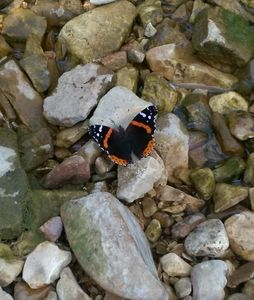 Photo of a friendly Butterfly