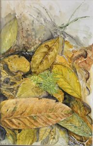 dry leaves at sg.congkak