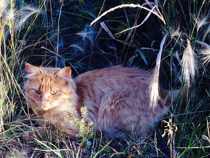 Tabby in The Grass - Photography by Marcie Lowndes