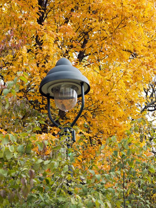 lamp in the autumn leaves - Art Gallery