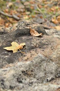 Leaf Zen