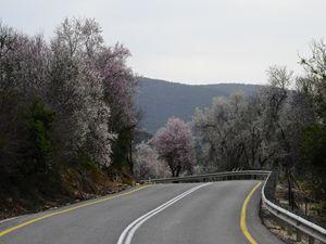 Through the almond blossom