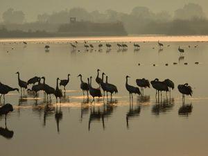 Sunrise over the cranes