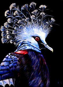 Victoria Crown Pigeon
