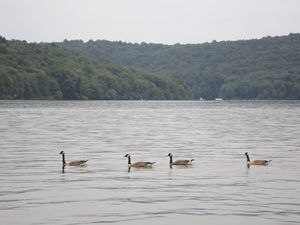 Four Geese in a Row