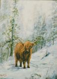 Highlander cow in falling snow