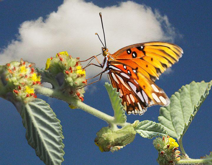 Butterfly 1 - Vittek Studios