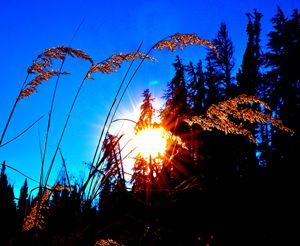 Mountain Grass