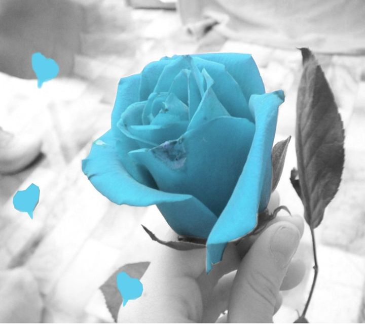light blue Rose - MandysArtGallery8484