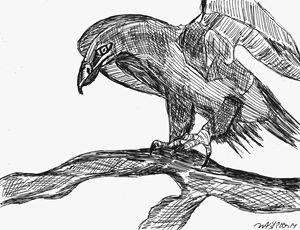 Hawk On A Branch
