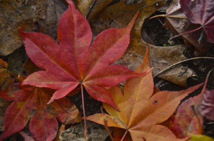 Fall colors - PhotosbyNan