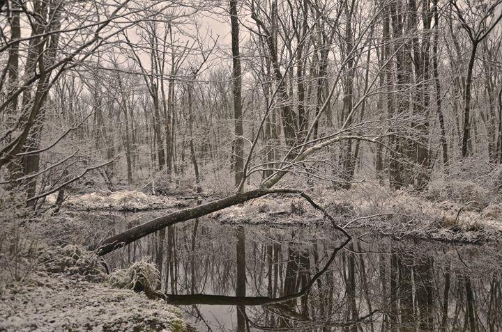 First snowfall in the swamp - PhotosbyNan