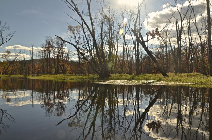 Reflections in the swamp - PhotosbyNan