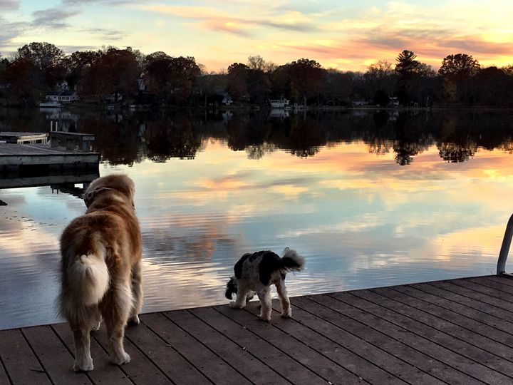 Sunset dogs - PhotosbyNan