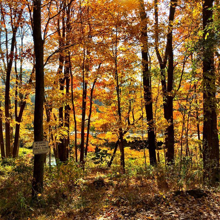 Fall at the Great Swamp - PhotosbyNan