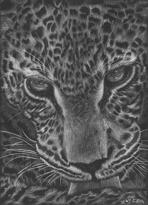 Wild wisdom / Jaguar - WP Griffith