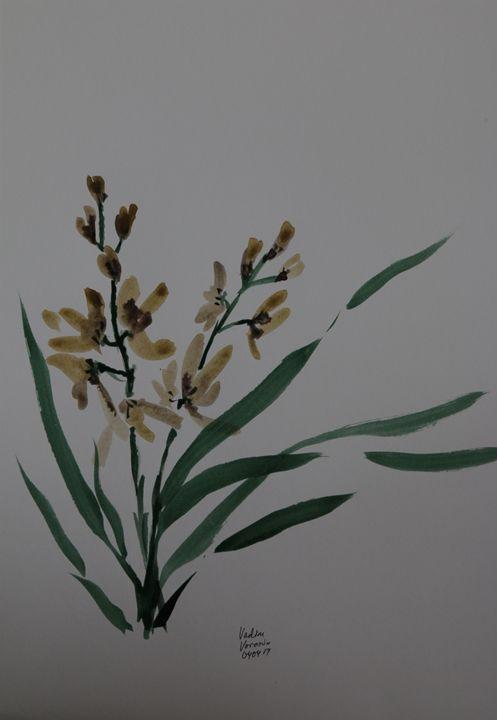 Marsh orchid morning - VV