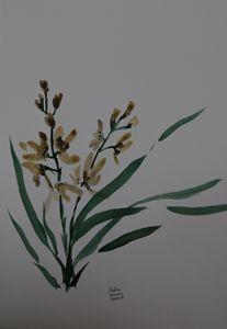 Marsh orchid morning