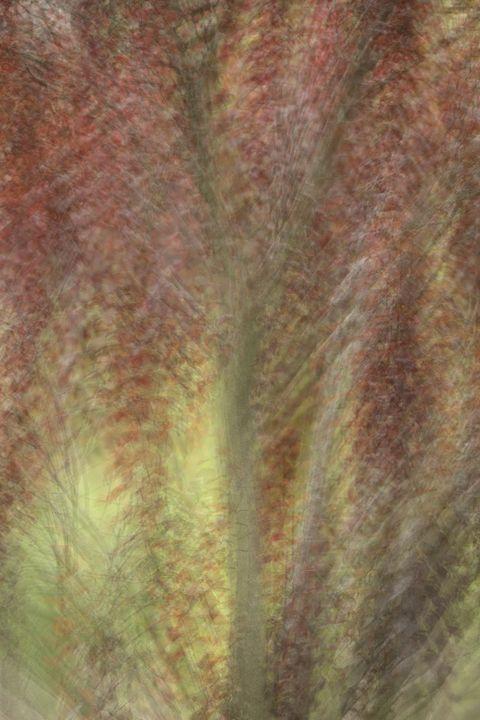 abstract tree 2 - leftysphotos
