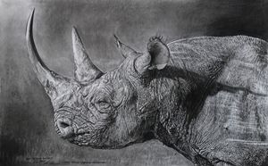 Black rhino at sunset