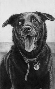 Lucy, Black Dog.