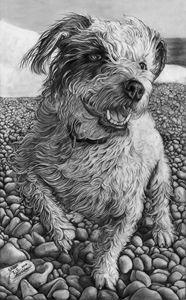 Sadie, pet portrait.