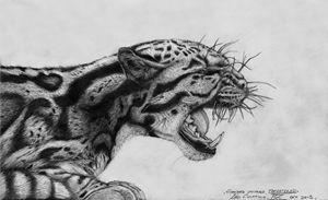 Clouded Leopard: Threatened