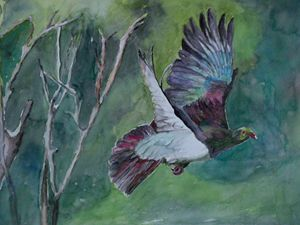 NZ native Wood pigeon in flight