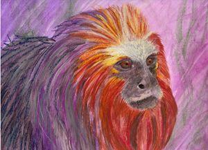 Blazing Lion Tamarin