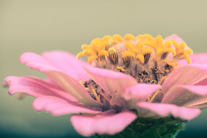 Beautiful Flower - Jaci Harmsen Photography