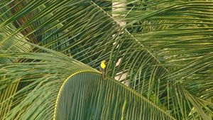 Bird on a Coconut Tree