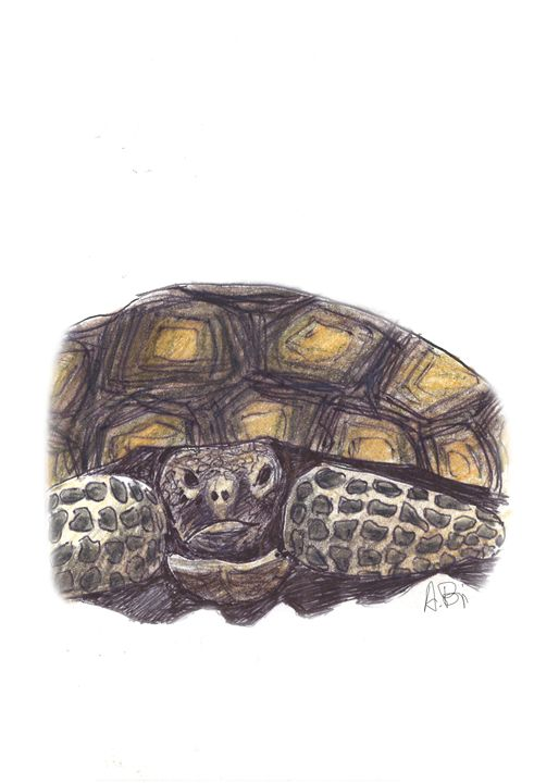 Turtle - al_isin_wonderland