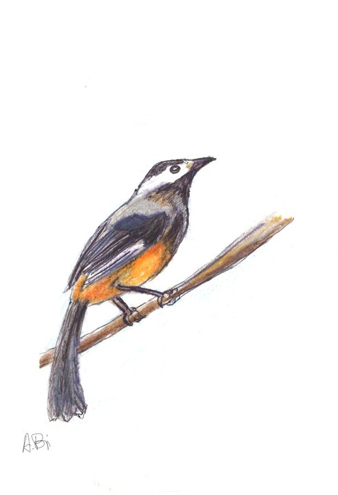 Bird - al_isin_wonderland