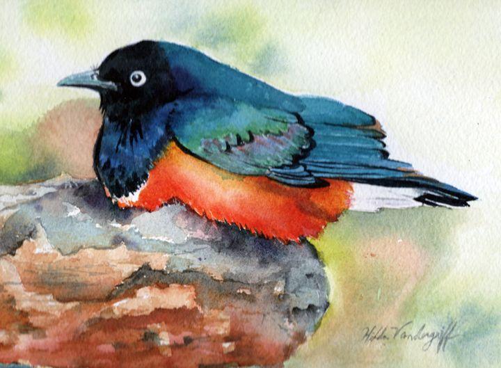 Blue Bird - Hilda Vandergriff