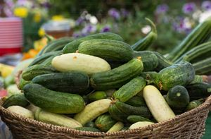 Basket of Cucumbers - Michael Moriarty Photography