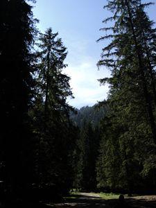 Pine tree forest climbing path