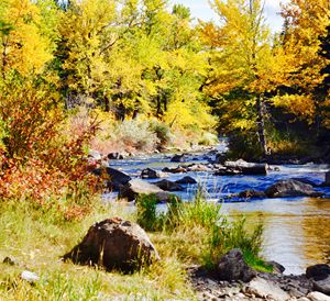 Crowsnest River in Fall
