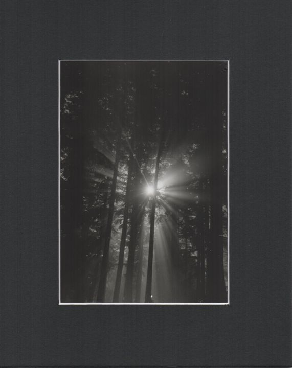 Sunlight and Fog Series - Krohn Photography
