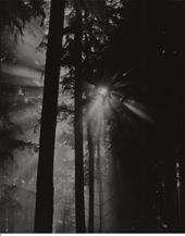 Krohn Photography