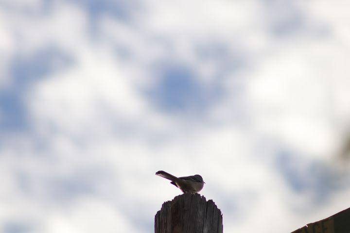 Bird on phone pole - Kate-Ann Art and Photography: Stephanie Perry
