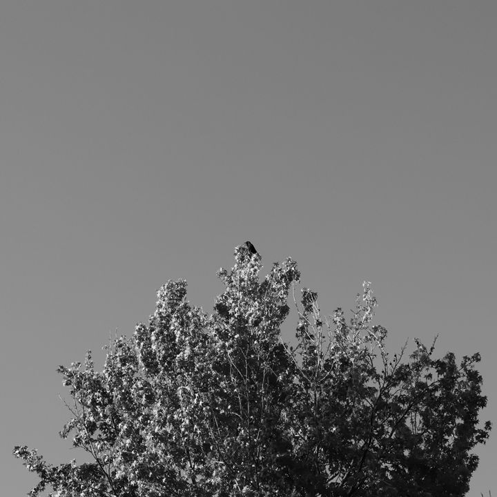 Bird in Tree - Kate-Ann Art and Photography: Stephanie Perry