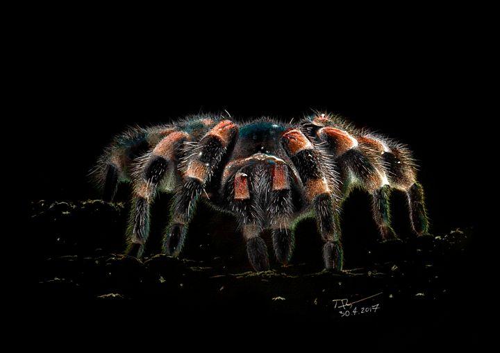 The Spider - Tommi Bäckgren