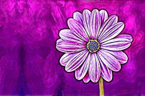 Purple Flower Essence