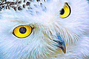 Owl Presence