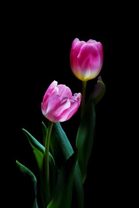 Botanical Black #4 - Nan Mac