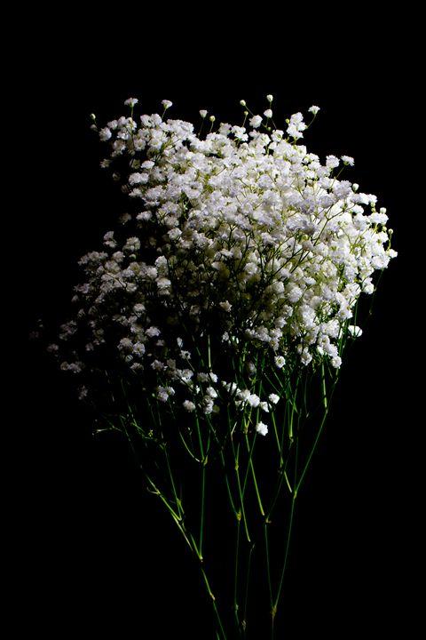 Botanical Black #3 - Nan Mac