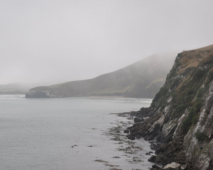 Misty Shore of New Zealand - Codye Reystead